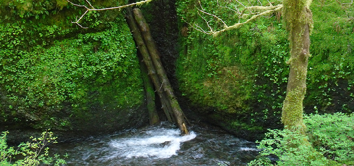 Photograph of flowing river with mossy banks and debris, Portland, OR.